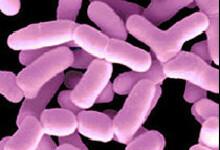 Top Ferment+ melkzuurbacteriën